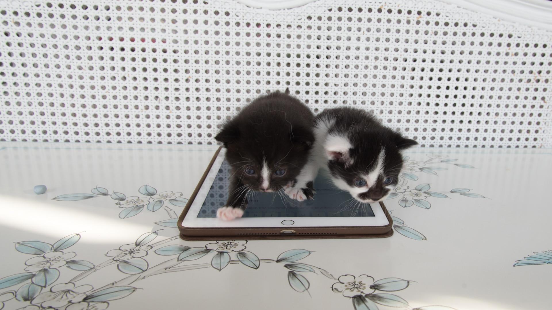 Revisión del iPad Air 2: reemplazado por el último iPad de 9.7 pulgadas de Appl